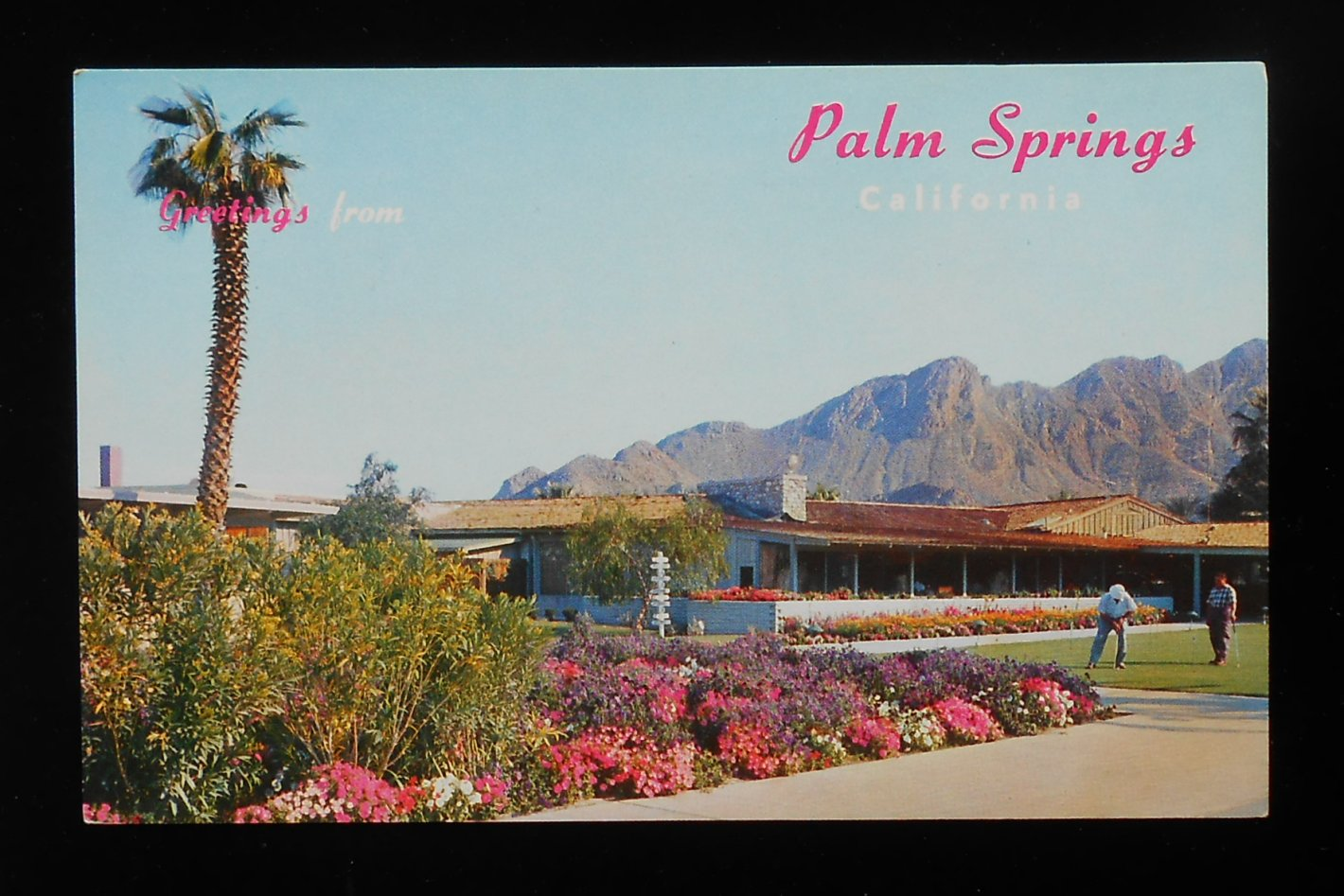 1950s the thunderbird country club putting green golf palm for Thunderbird golf course palm springs