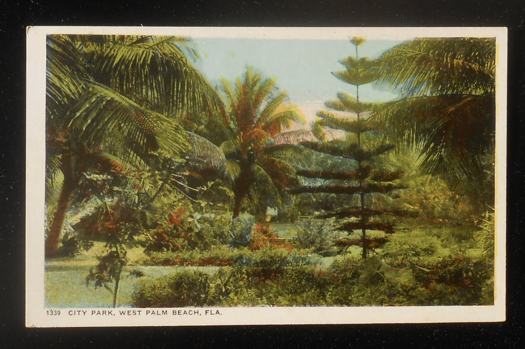 1910s City Park West Palm Beach Fl Palm Beach Co Postcard